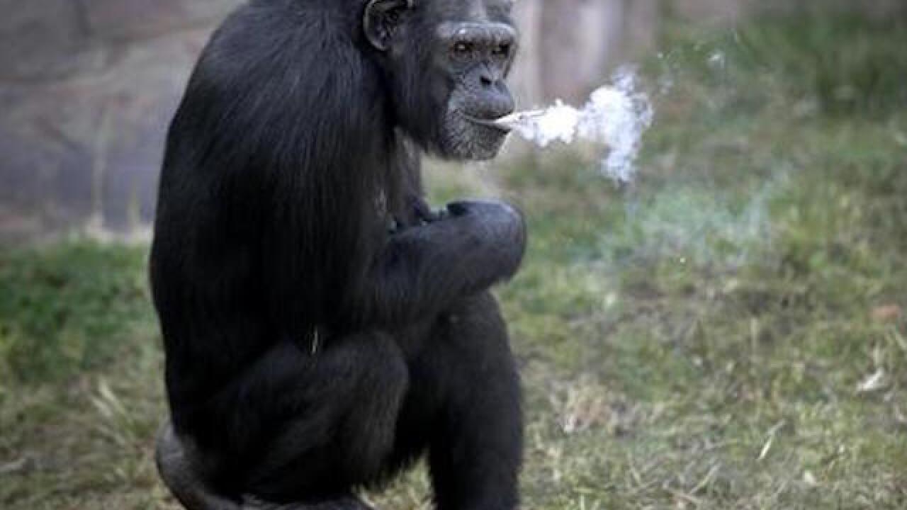 Smoking chimp highlights North Korean zoo