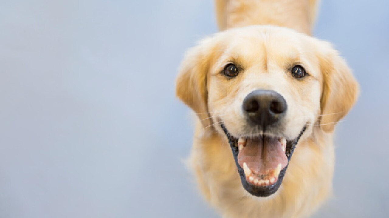 FDA warns about dog 'bone treats'