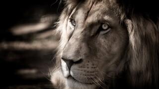white-lion-2889308_1920.jpg