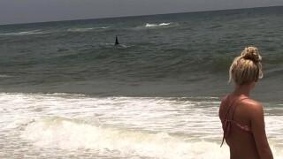 wptv-hammerhead-offshore-navarre-beach.jpg