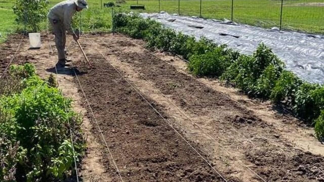 edelin farming 1.jpg