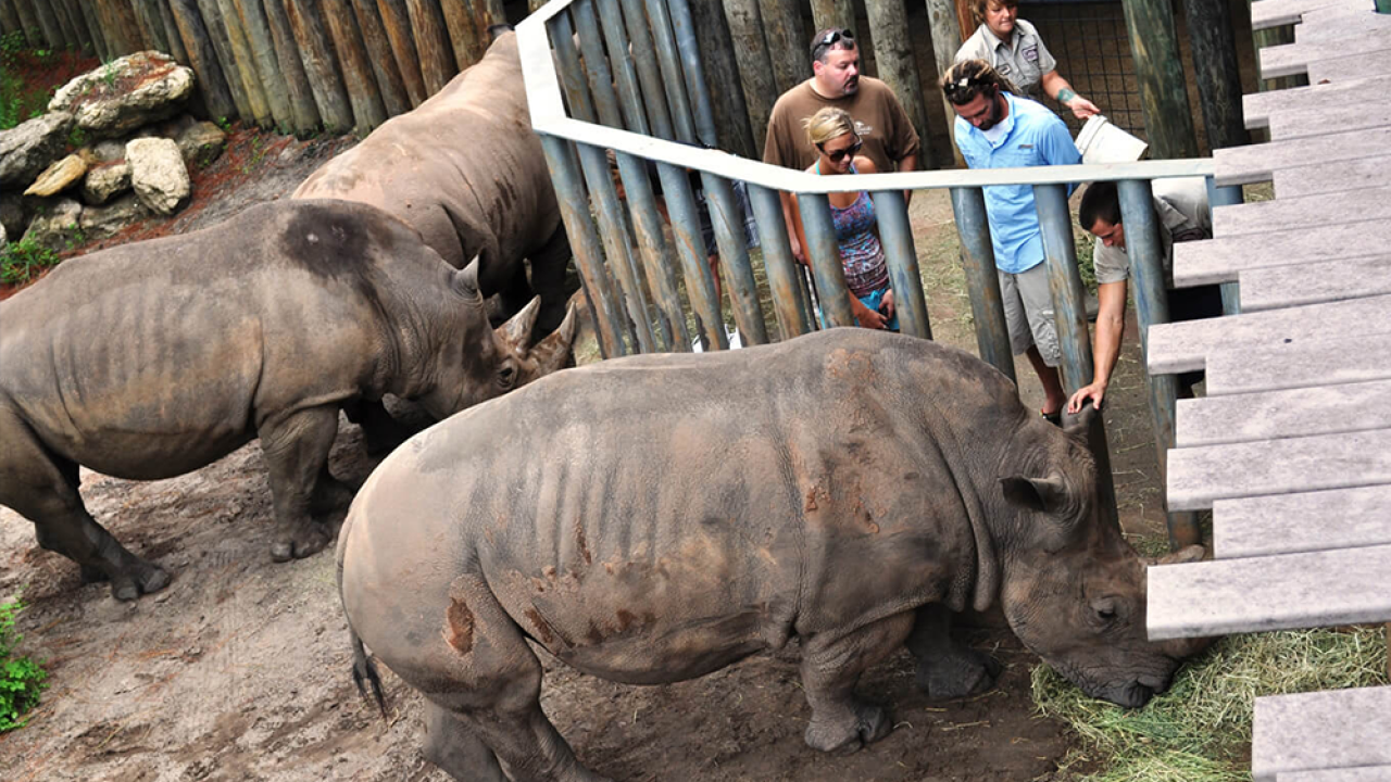 Child rushed to hospital after falling into rhinoceros exhibit at Florida zoo