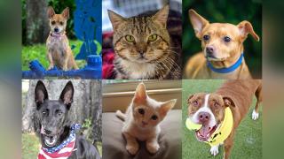 Adoptable-Pets-June-21.png