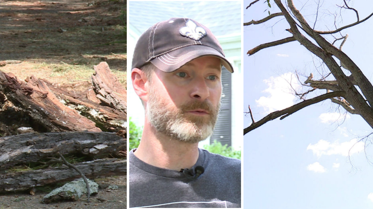 Richmond residents anticipating storms concerned about dead trees slated forremoval