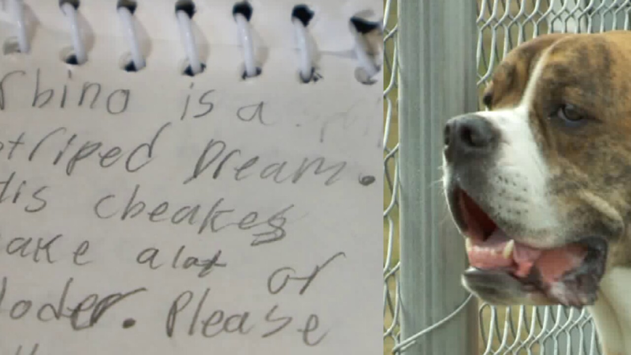 'Rhino is a striped dream': Dog left at Utah shelter with list of instructions from heartbrokenchild