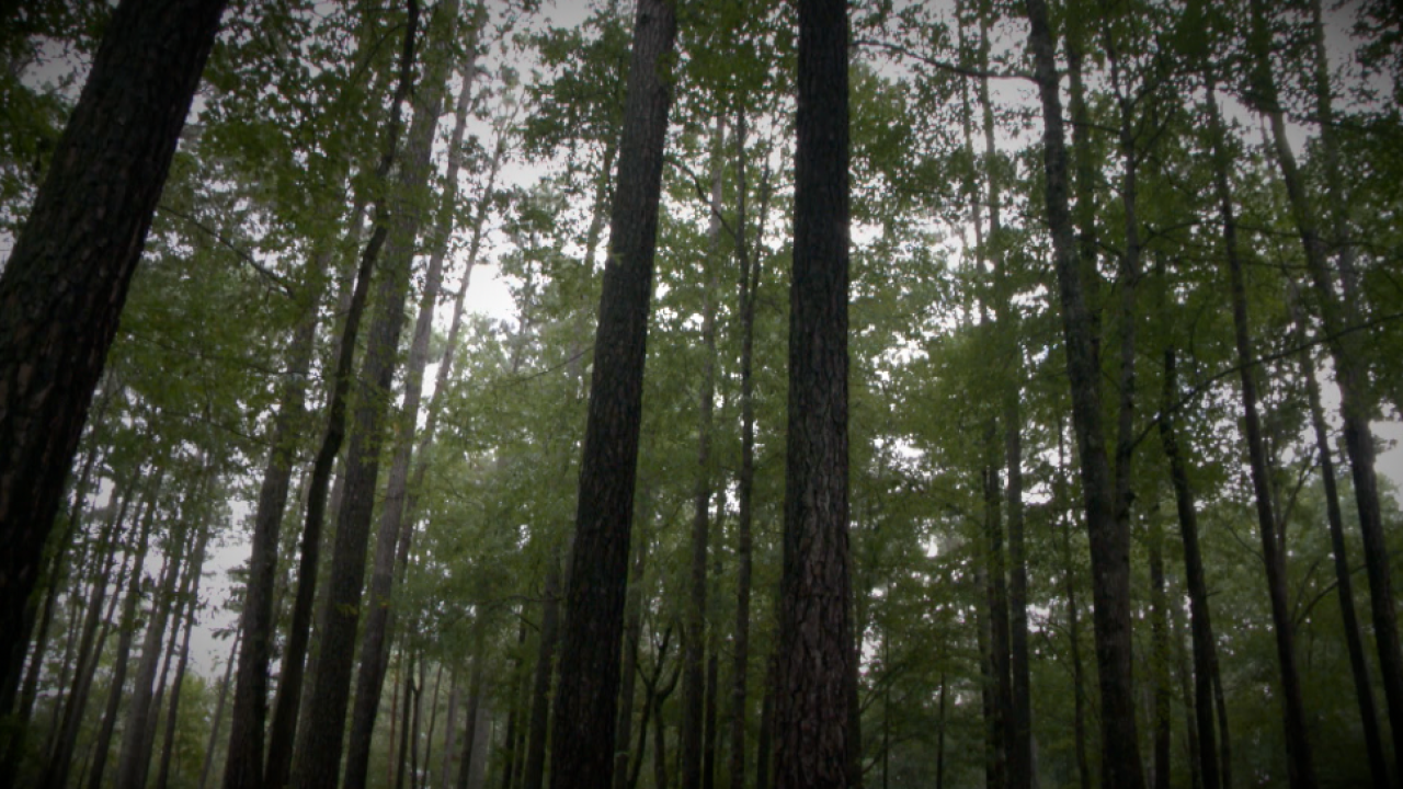 Great Dismal Swamp carries storied, perhaps haunted, history