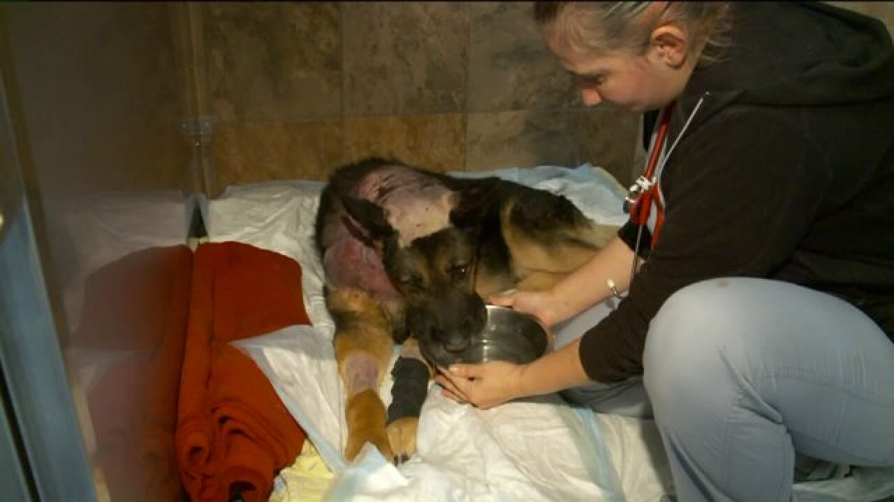 Retired guard dog stabbed while defending Taylorsville home during burglary attempt