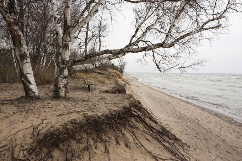 shoreline-771x514.jpg