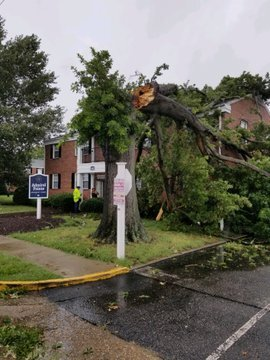 tree on an apartment building at Admiral Point Apts off 73rd St. & Belvedere Dr. (Photo courtesy NN Polive).jpg