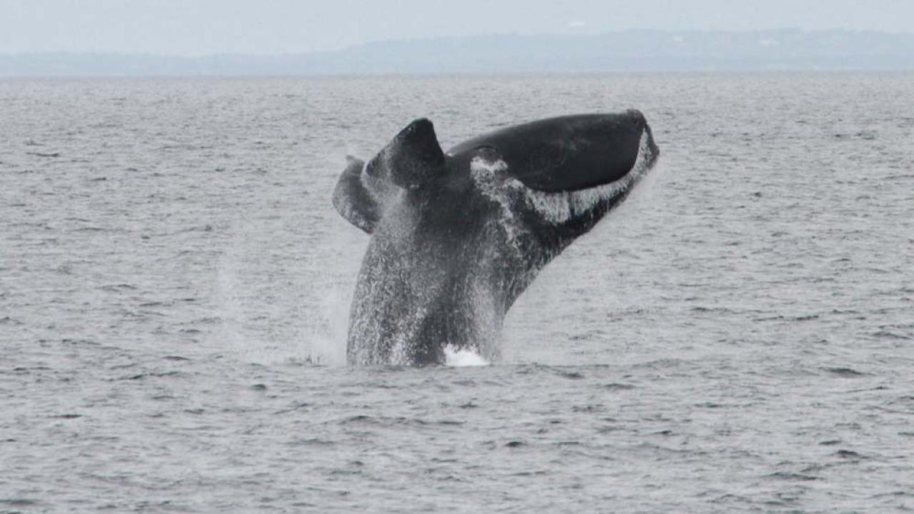 whalewtkr.png