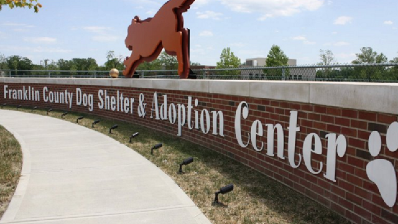 Animal shelter in Ohio under fire for euthanizing 52 dogs over distemper outbreak