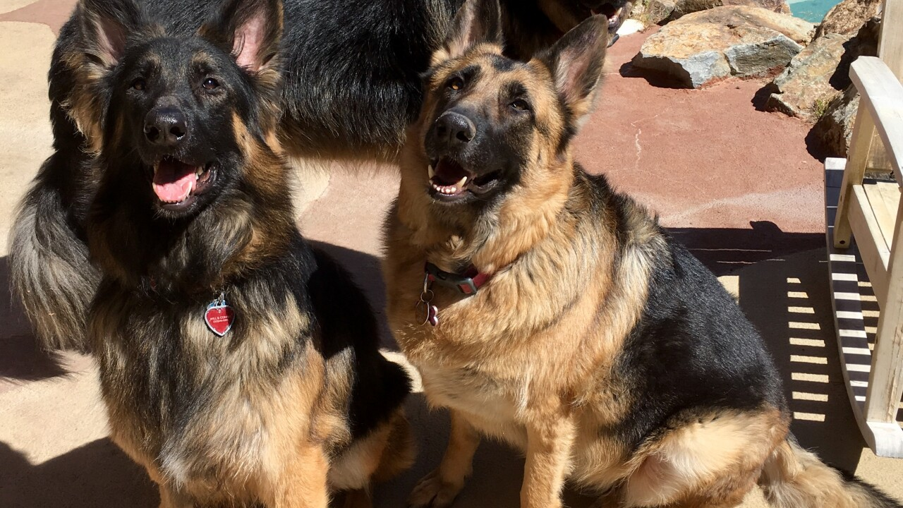 Several dogs have been targeted with poison meat believed to have been tainted with strychnine near Ft. Apache and Desert Inn since at least 2015.