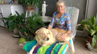 Suzan Marciano with dog