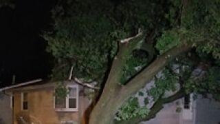 fdl tree on house.jpg