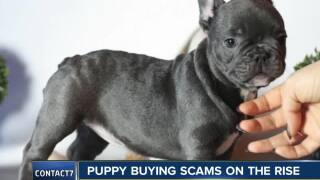 Puppy buying scams on the rise