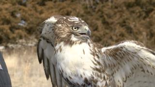JoCo airport wildlife management.png