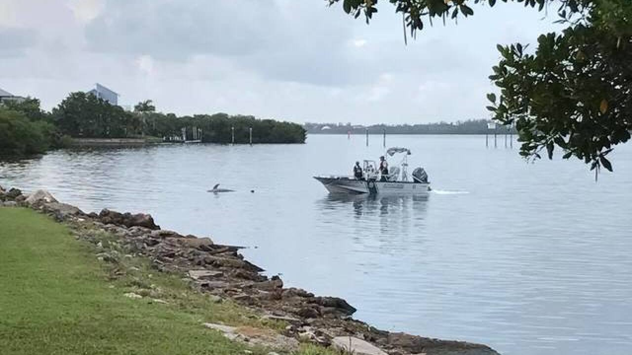 Dolphin & other sea life found dead in Englewood