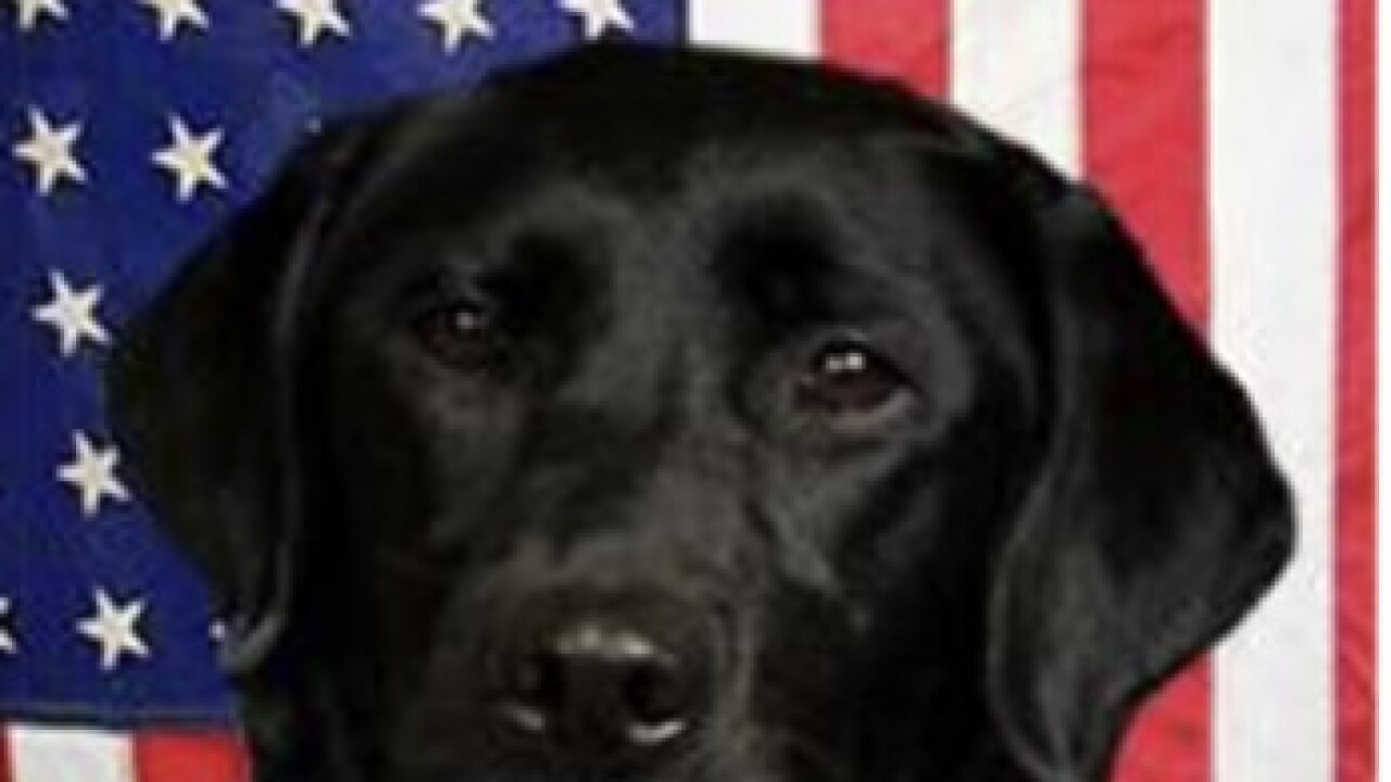 Denver ATF dog on scene of school shooting