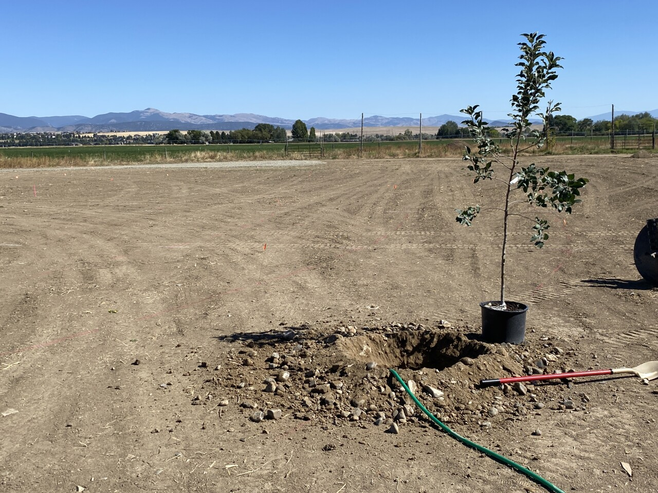 West Mont Orchard Tree