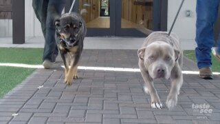 Jake and Merlot are ready to be adopted from Big Dog Ranch Rescue.