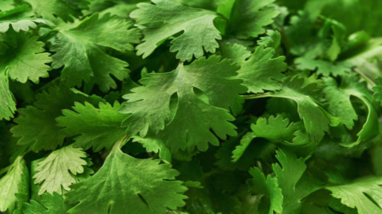 Here's Why So Many People Hate Cilantro, According To Science