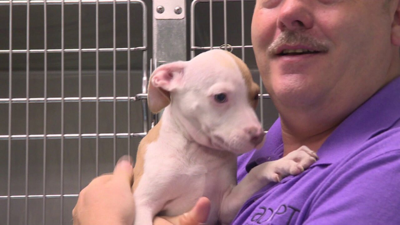 Dogs rescued from North Carolina shelter find homes in HamptonRoads