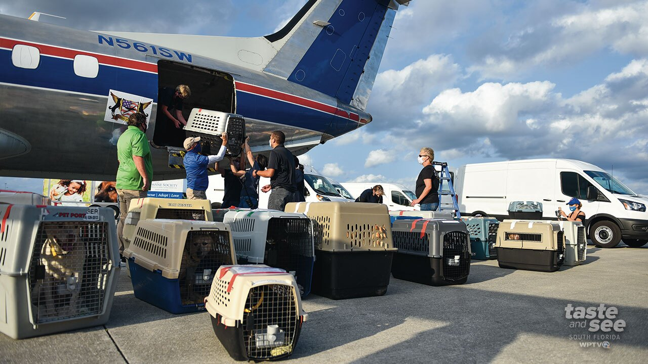 Peggy Adams Animal Rescue League rescued 70 dogs as a result of the recent severe winter storms in Texas.