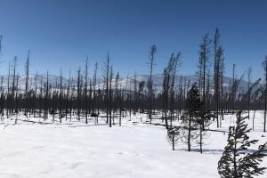 East Troublesome Fire_Nov. 7 2020_snow