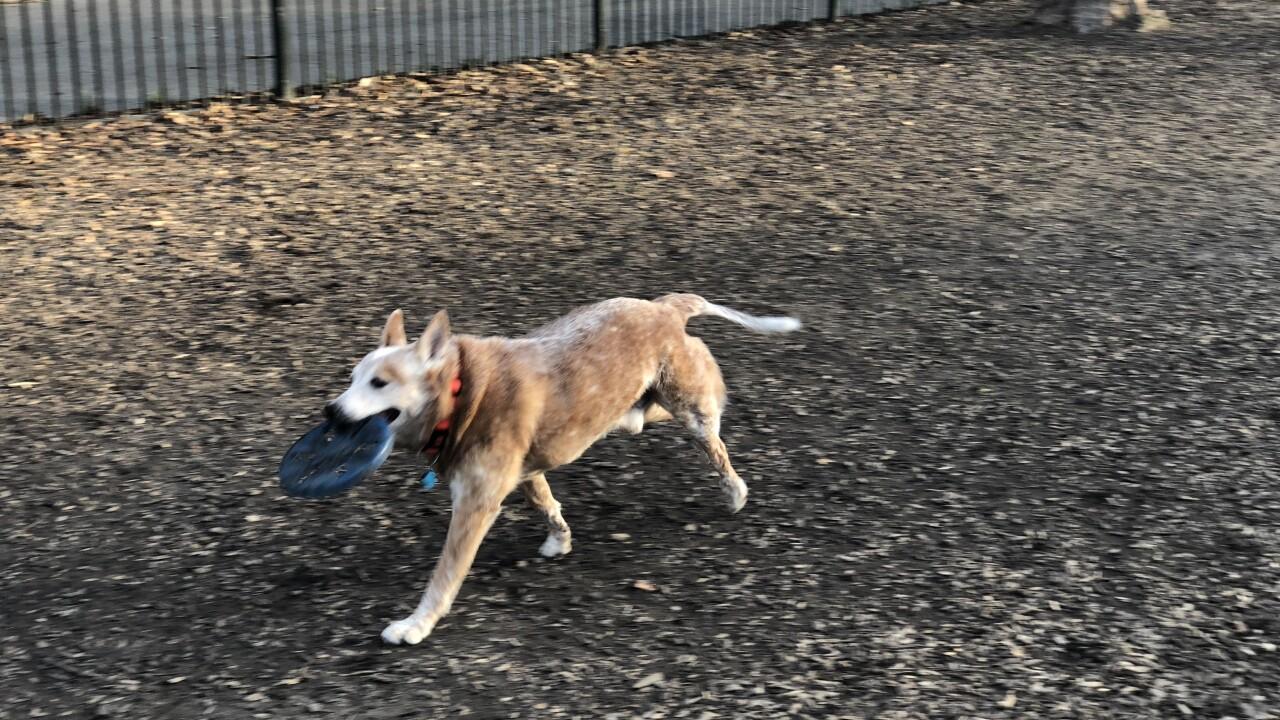 Frustration over Ghent Dog Parkhours