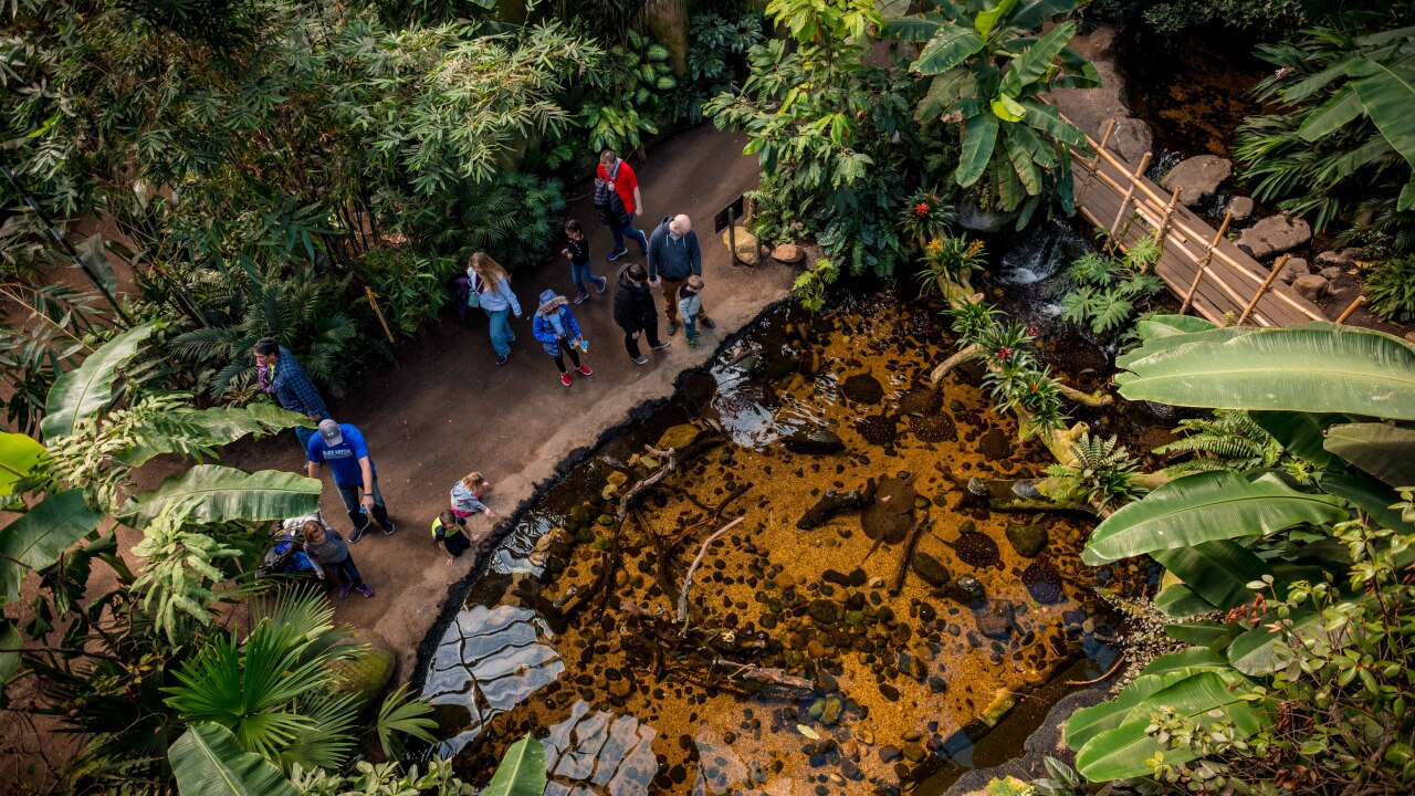 Lied Jungle at Omaha's Henry Doorly Zoo and Aquarium.jpg
