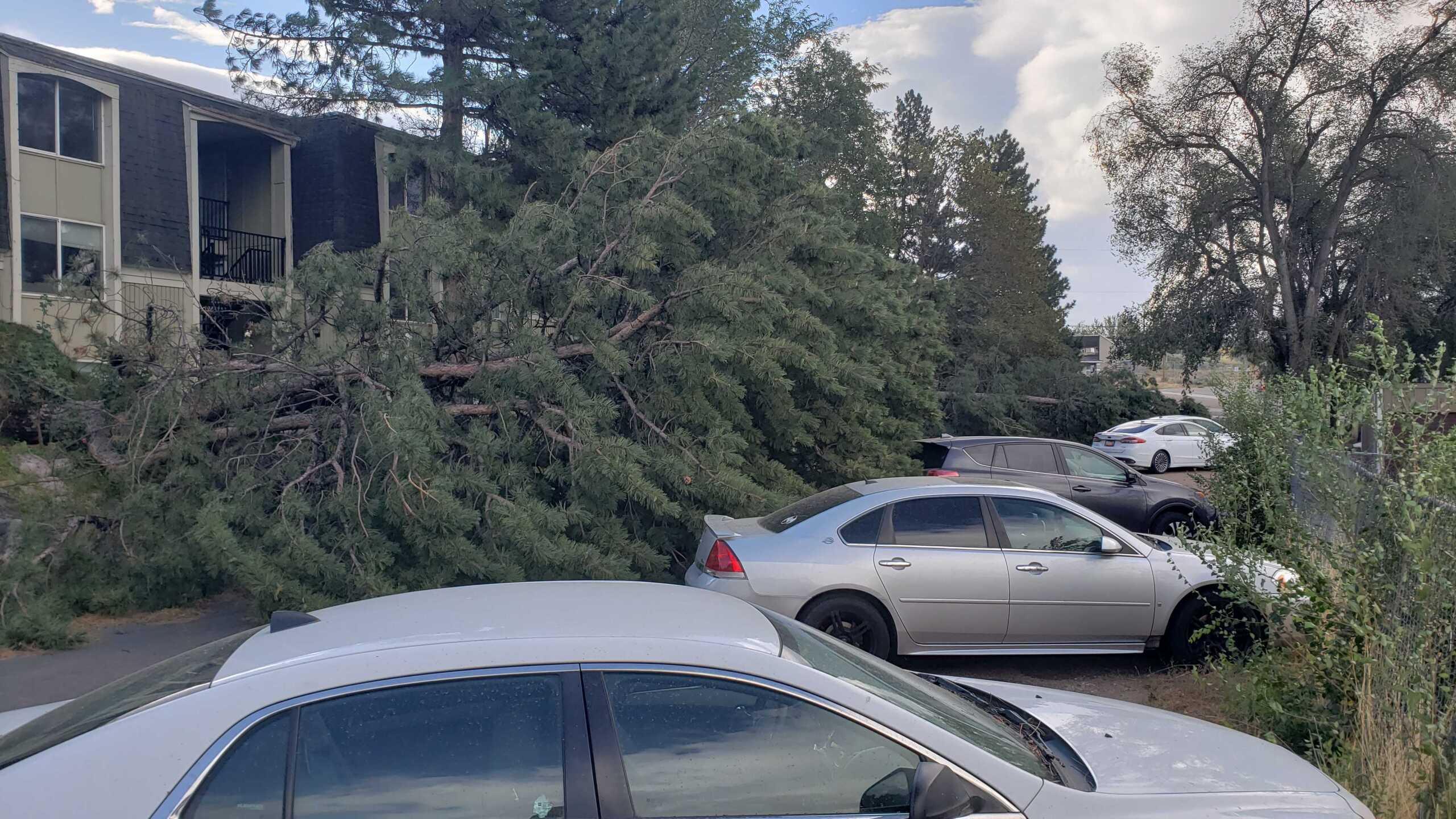 Wind Damage in Ogden (3).jpg