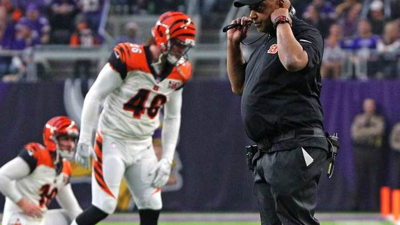 Flying Pigskin: Marvin Lewis disputes reports he will leave Bengals as team loses big to Vikings