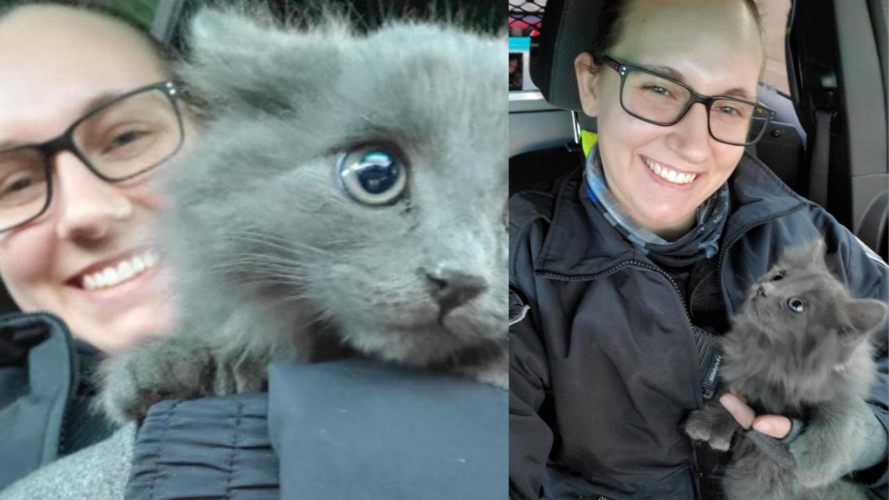 NHP kitten rescue.png