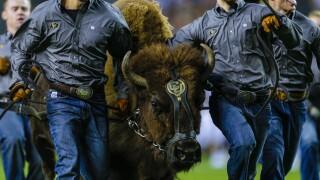 ralphie colorado buffalo ralphie cu buffs 2018