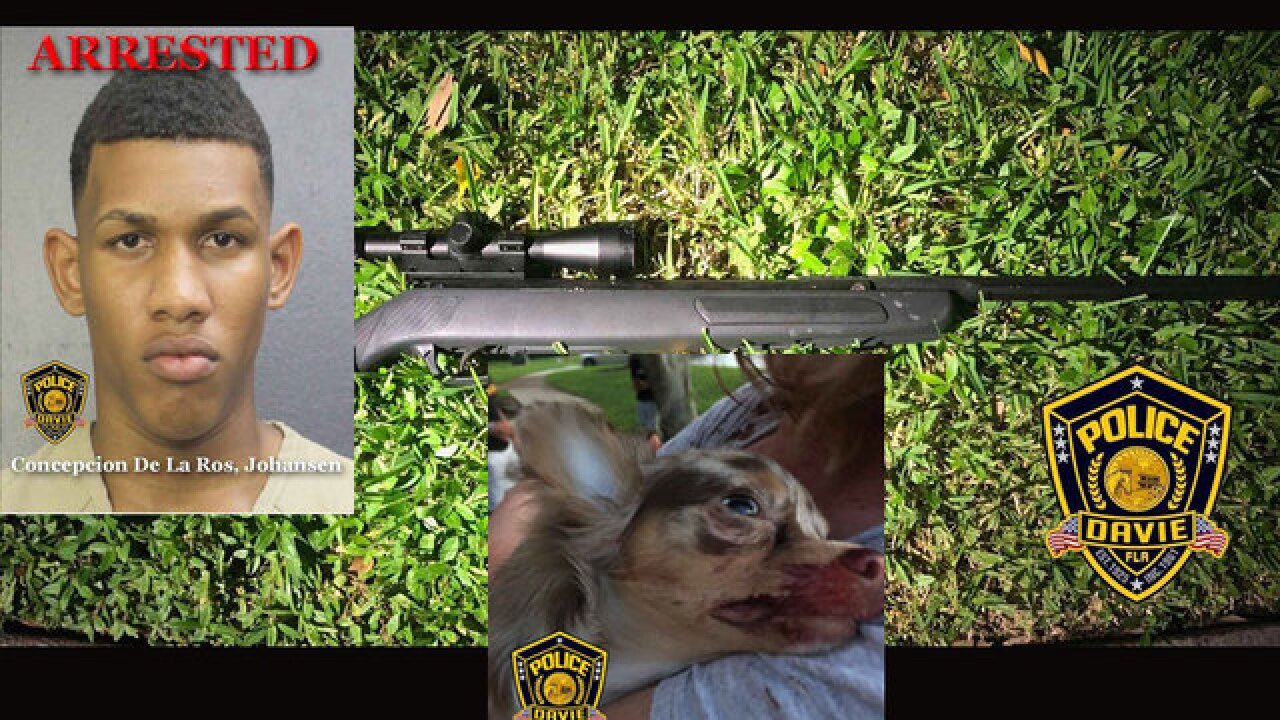 Police: Florida man on balcony shoots puppy with pellet rifle
