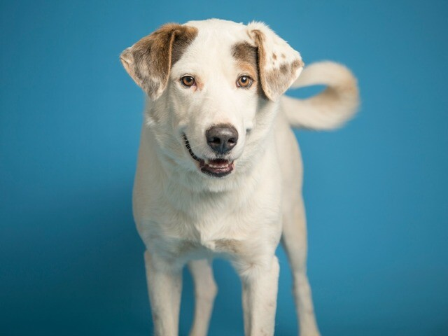 Adoptable pets from Maricopa County Animal Care and Control and Arizona Humane Society (5/11)
