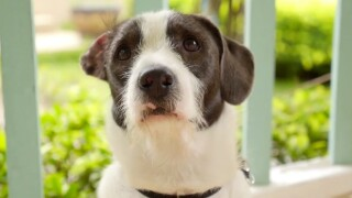 Veterinarians warn pets could experience separation anxiety as owners return to work