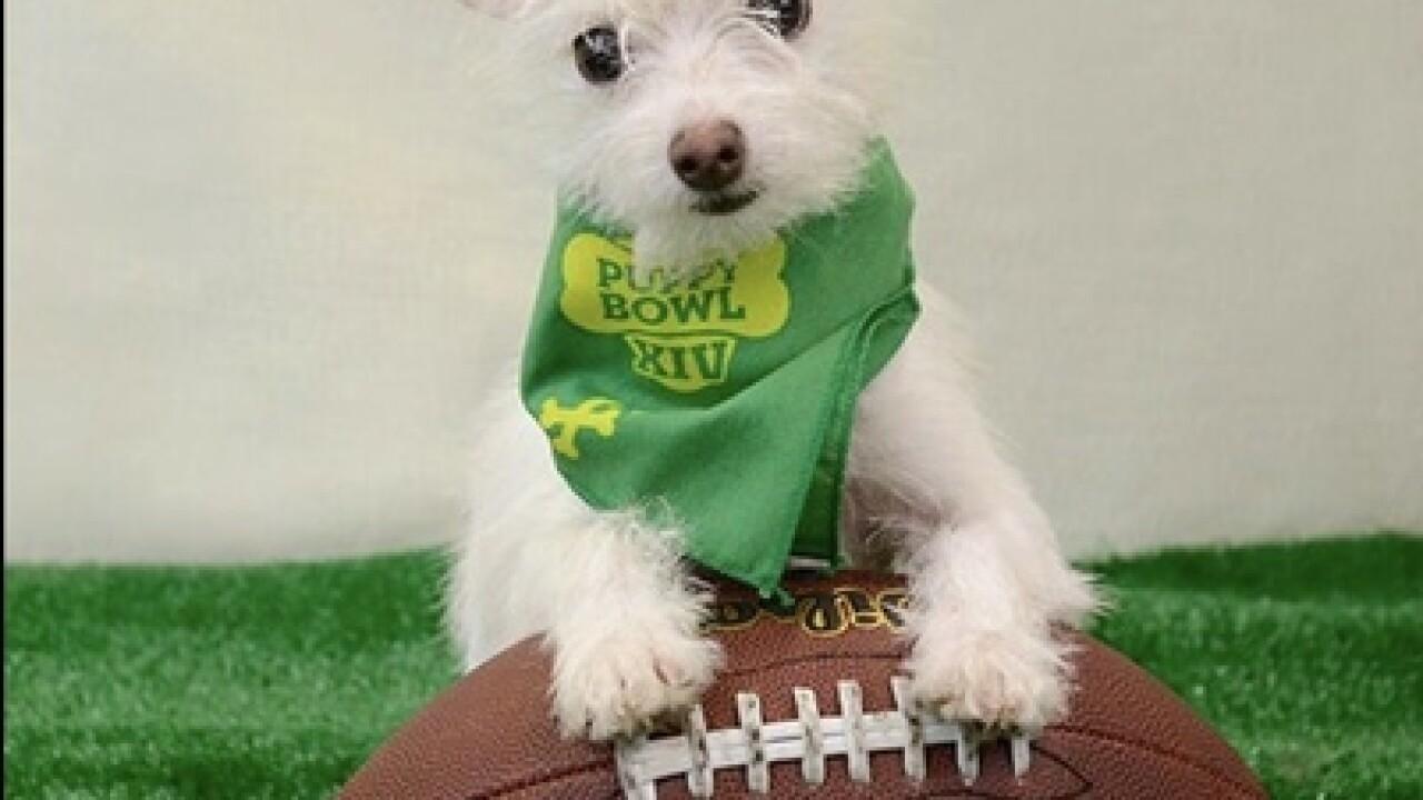 2 Las Vegas dogs part of Super Bowl festivities