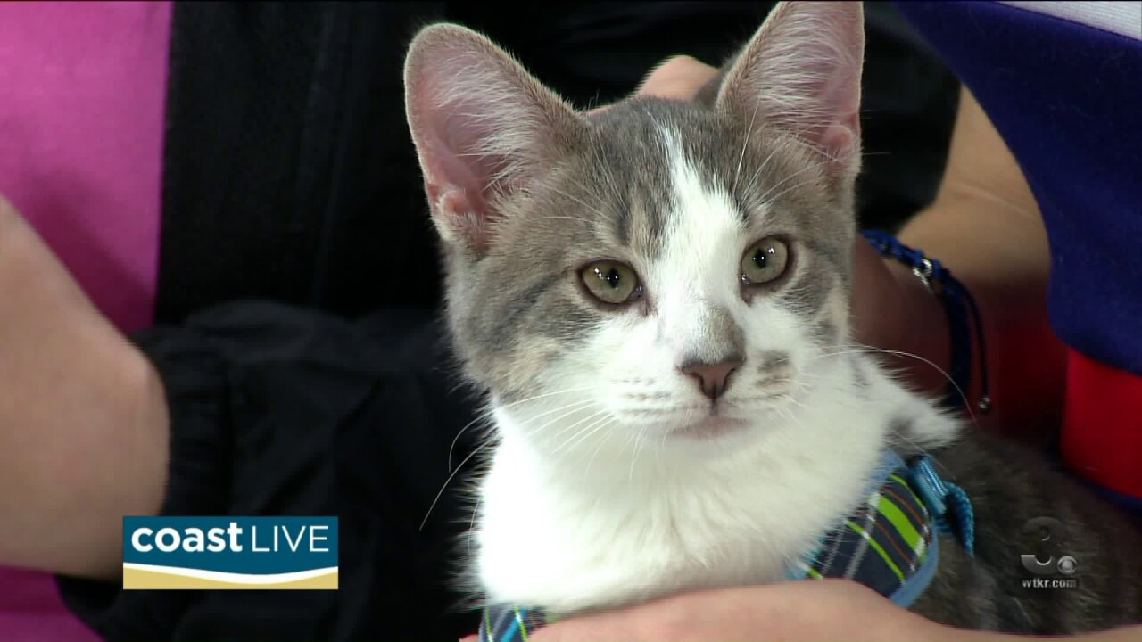 Thinking outside the box (the litter box) with Norfolk SPCA on Coast Live