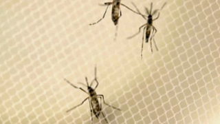 Palm Beach County to spray for mosquitoes Tuesday