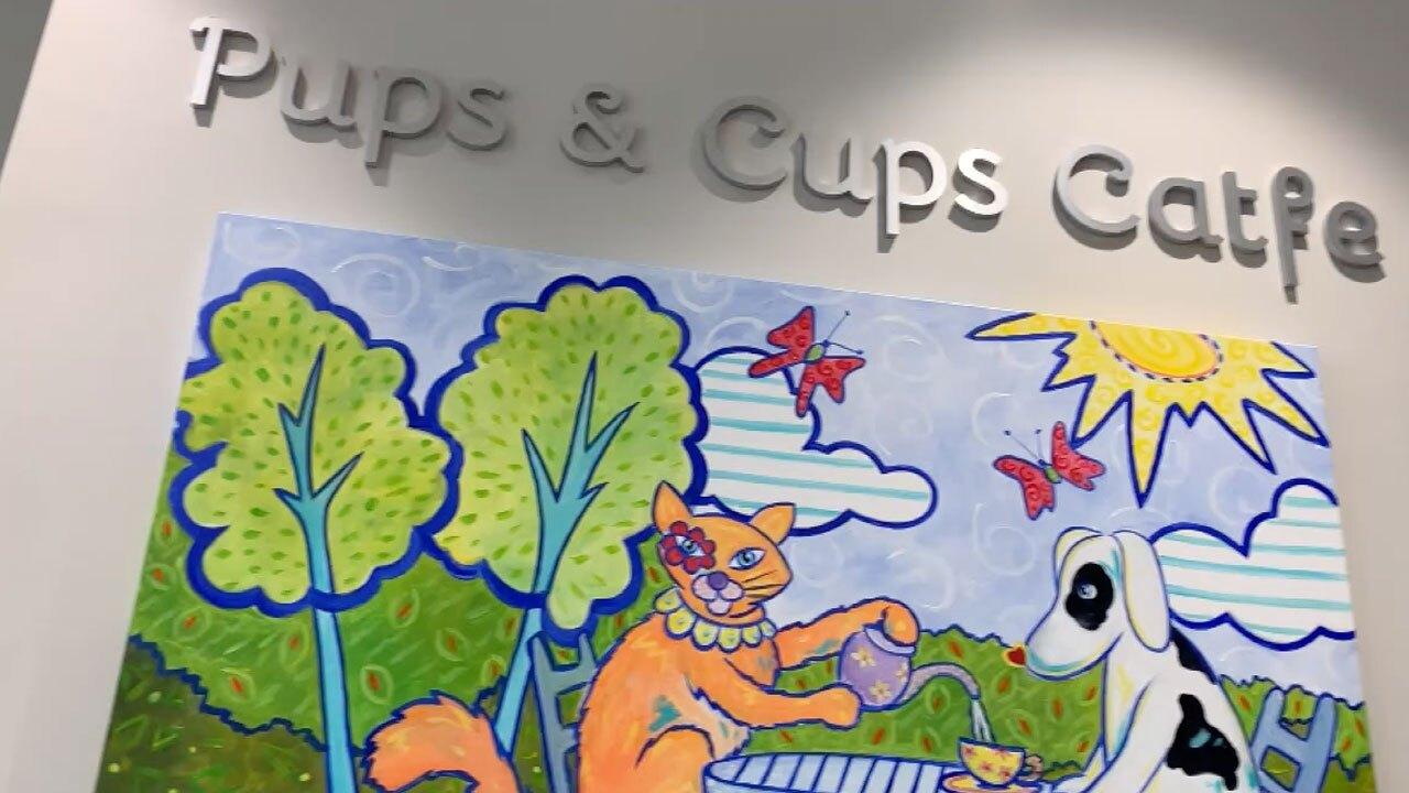 Furry Friends Pups & Cups Cafe in Jupiter
