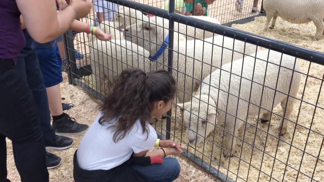 san diego county fair petting zoo 2018