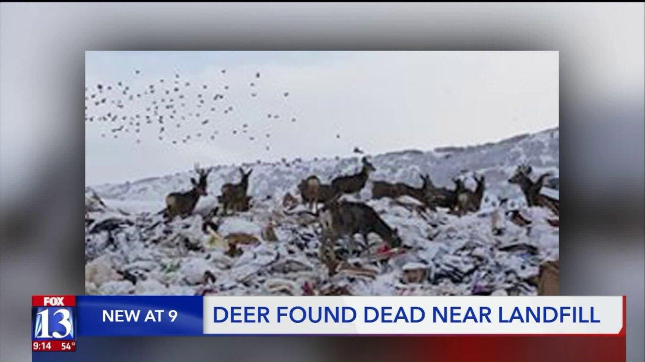 Dead deer found near Summit Countylandfill