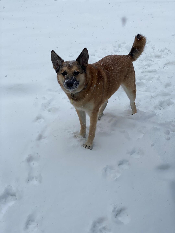 dog in the snow.jpg