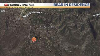 Bear in Residence.JPG