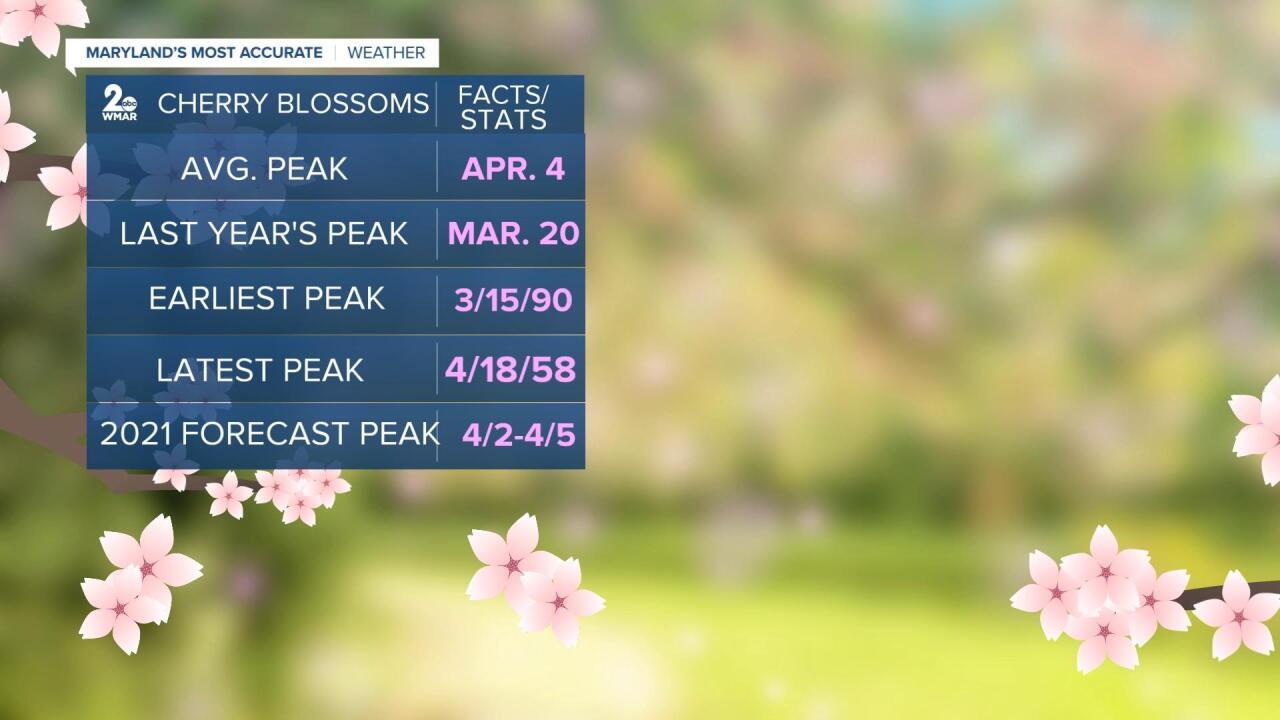 Cherry Blossom Stats.jpg