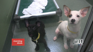 Paws & Claws: Puerto Rico DogRescue