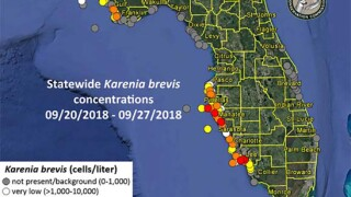 Red Tide Update: Concentrations decrease in Pinellas, Manatee and Sarasota