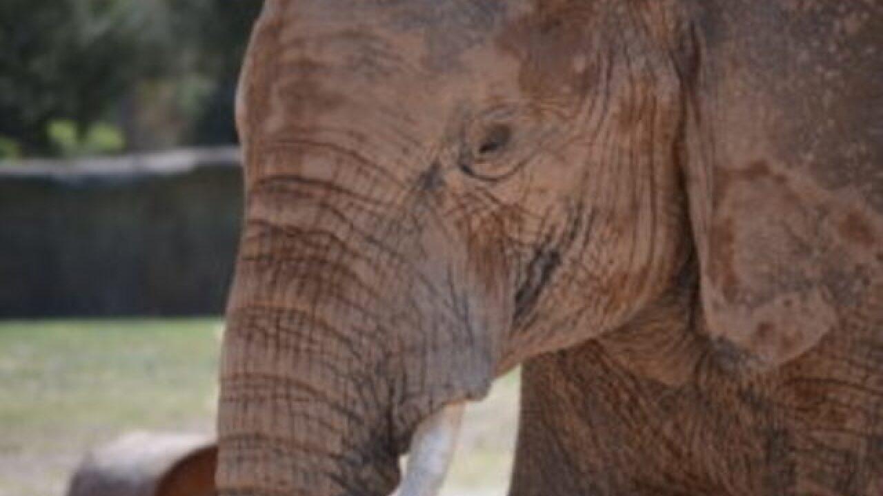 Elephant dies at Reid Park Zoo in Arizona