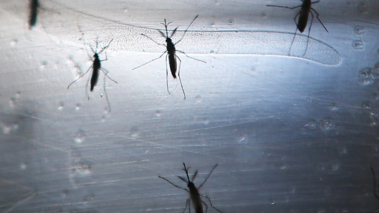 United Nations lifts emergency declaration on Zika
